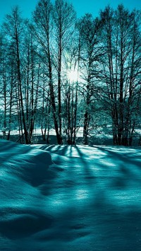 Landscape Snow Trees Winter Nature