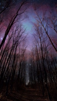 Forest and the Stars