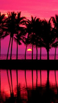 Pink Sunset With Palm Trees