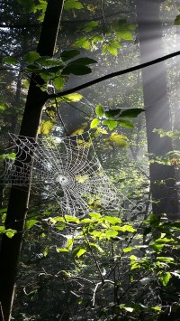 Spiderweb in forest