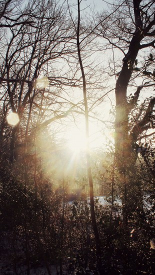 Glorious Winter Sun