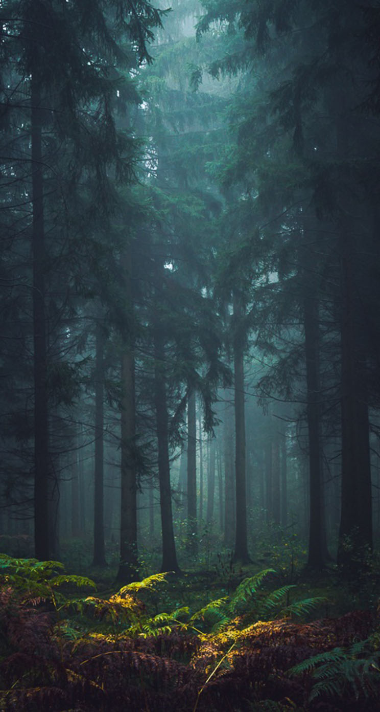 2019 year look- Forest Misty pictures