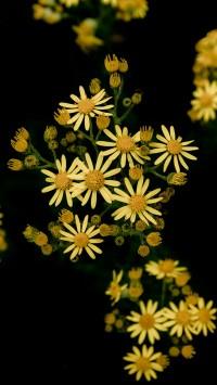 Pretty-weeds-200x355