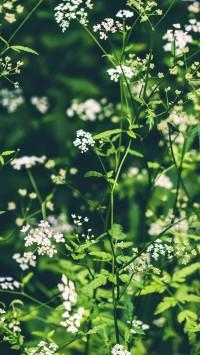 Wildflowers-Pasture