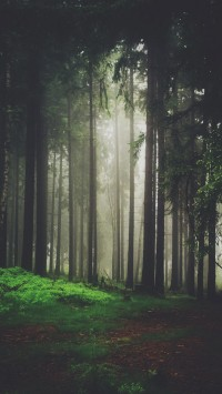 Dark-side-of-the-forest-200x355