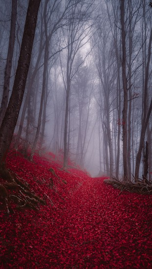 Foggy Misty Autumn Forest