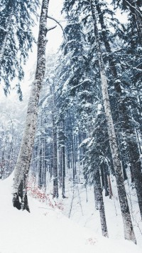 winter-snow-covered-tree