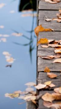 Autumn Leaves On Wooden Bridge