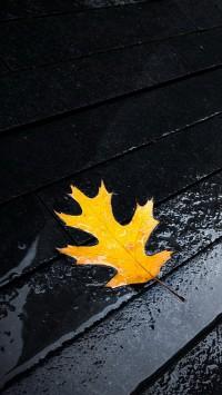 Autumn Leaf On Floor