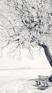 Beautiful Frozen Tree