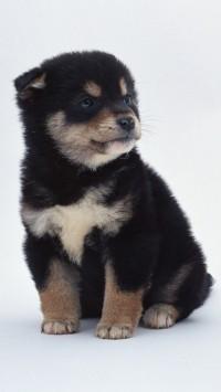 Cute Little Black Dog