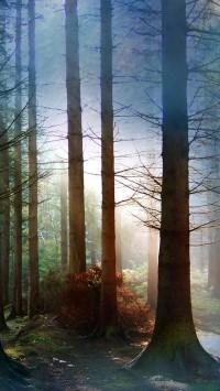 Fog Amongst Trees