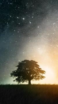 Star Trees