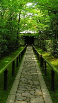 Trees Bamboo Path Outdoors