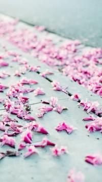 Blossom HQ