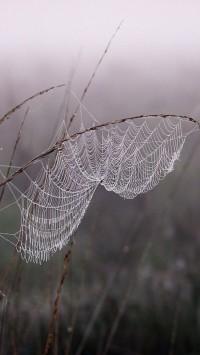 Cobweb Dew Fog