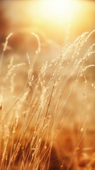 Morning Sunshine Beautiful
