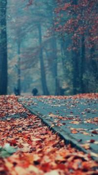 Deck Autumn