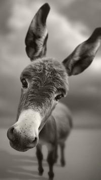 Donkey Funny