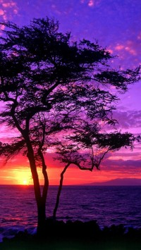 Magical Sunsets