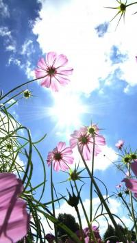 Purple Flowers in the Sun