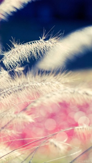 Close Up Of Wild Grass