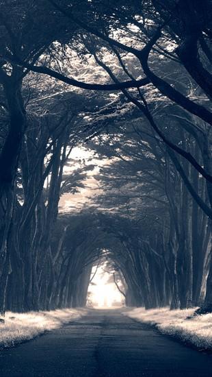 Dark Trees Avenue
