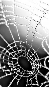 Drops on Web