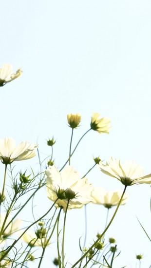 Flowering in autumn