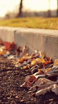 Leaves On Sidewalk