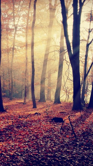 Morning Light in Autumn Forest