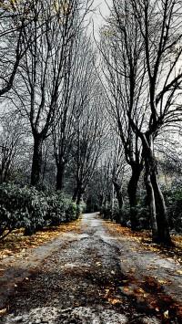 Road Autumn Landscape