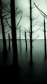 Sunken Forest Lake