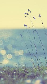 Coast grass sunshine