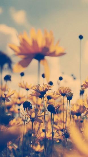 Summer Flower Sepia