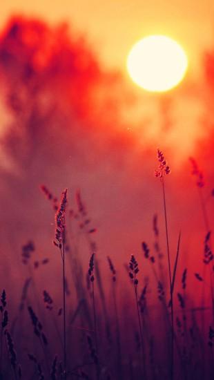 Nature Landscapes Sunset