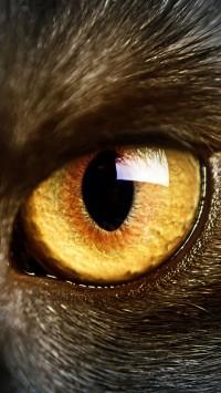 black cat yellow eyes macro