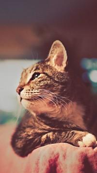Cat Retro Photography