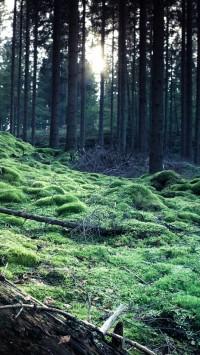 Forest Grass Fallen Bole