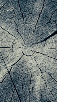 Annual Rings Cut Tree