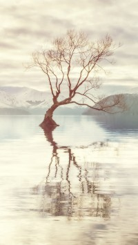 Lake Shore Tree