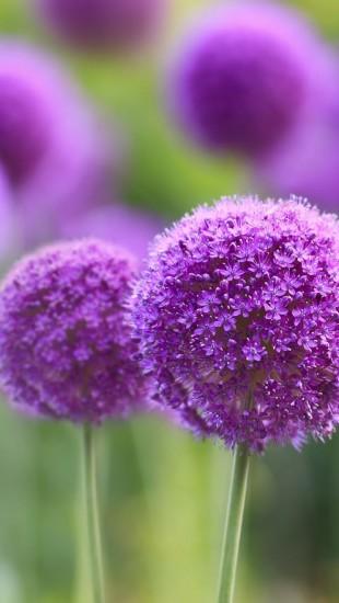 Natural Purple Flowers