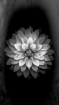 White flower IOS 8