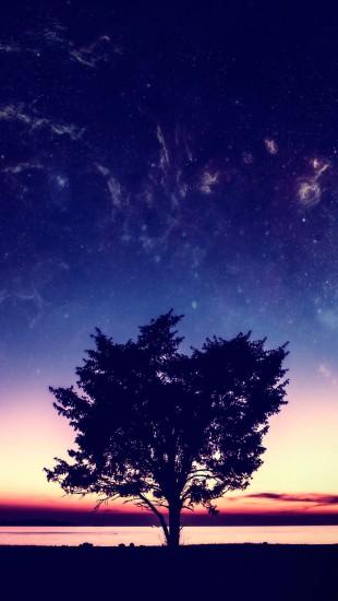 Wonderful Sunset Tree
