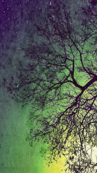 Artistic perspective of a tree