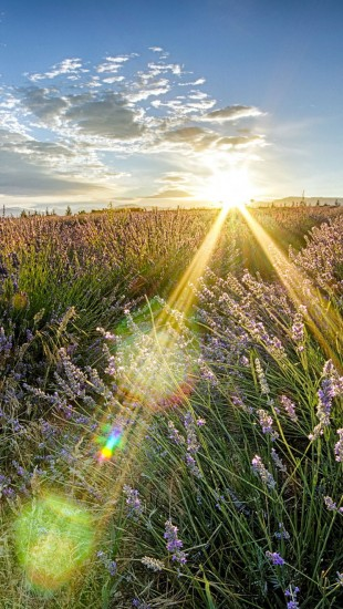 Rays beam sunlight nature landscapes