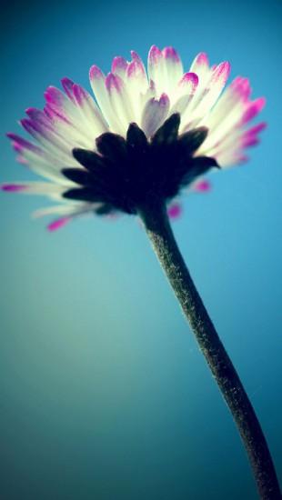 Daisy in the sky