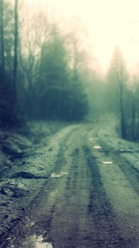 Forest Dirt Road
