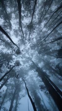 Sutro Forest