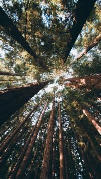 East-Warburton-Redwood-Forest-Australia-200x355